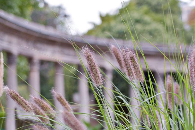 Paris Parc Monceau wild grass